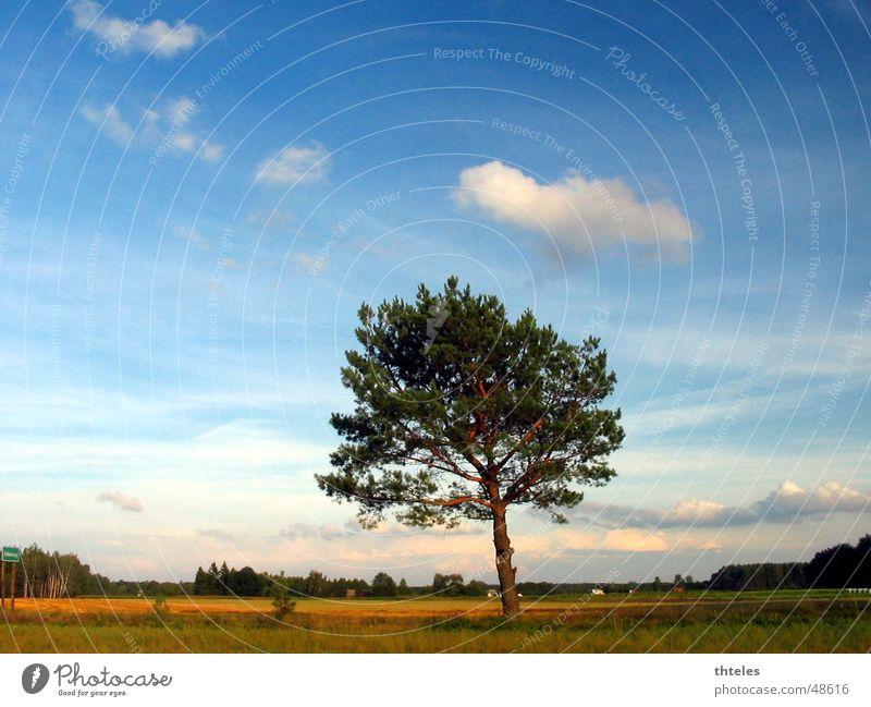 Sky Arvore Planta
