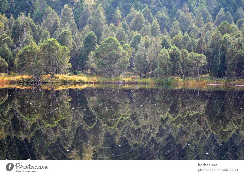 Nature Green Colour Water Tree Relaxation Loneliness Landscape Calm Dark Forest Environment Autumn Lake Moody Earth