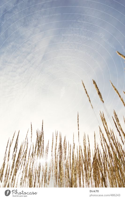 Summer day in the grass Environment Nature Plant Sky Clouds Sun Sunlight Beautiful weather Warmth Grass Blade of grass Garden Park Meadow Illuminate To dry up