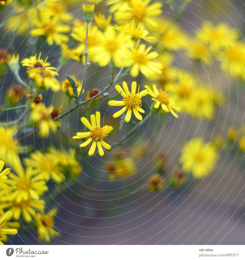 Nature Plant Summer Flower Leaf Yellow Environment Spring Blossom Garden Blossoming Herbs and spices Fragrance Spring fever Wild plant