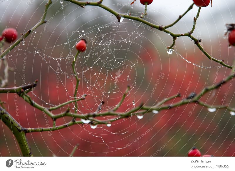 Spider's web in autumn after the rain Logistics Telecommunications Art Environment Nature Landscape Plant Animal Water Drops of water Autumn Weather Bad weather