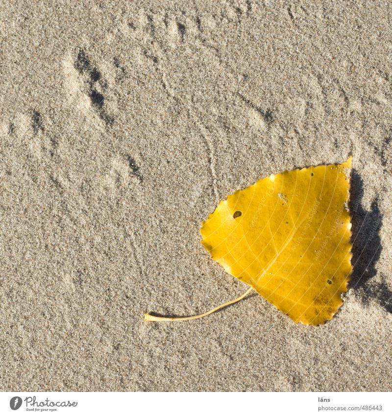 Autumn on the beach Nature Sand Beautiful weather Leaf River bank Beach To dry up Dry Yellow Gold Birch leaves Tracks Lie Change Sincere Colour photo