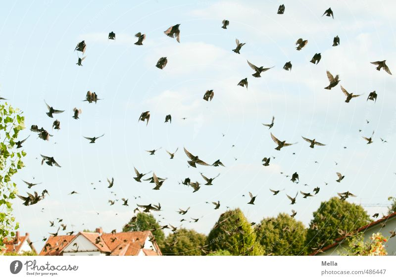 The Swarm Environment Nature Landscape Sky House (Residential Structure) Detached house Roof Animal Wild animal Bird Starling Flock Movement Flying Free Natural