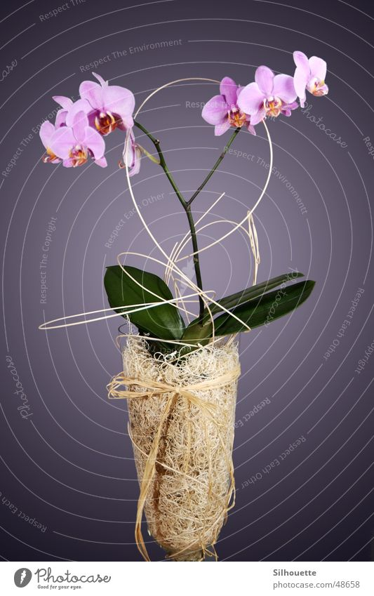 Flower Decoration Orchid Vase
