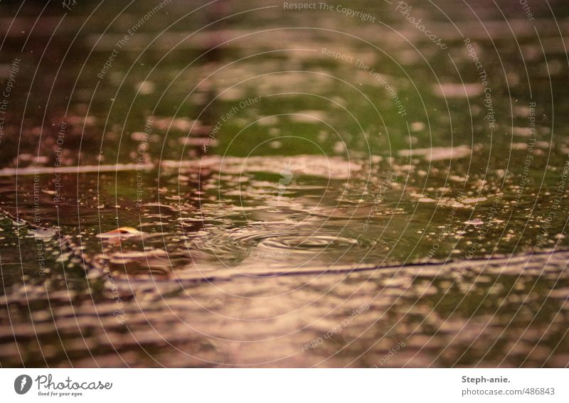 Nature Green Water Colour Calm Environment Natural Pink Rain Glittering Authentic Fresh Wet Drops of water Circle Touch
