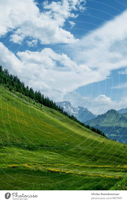 Pretty weird. Environment Nature Landscape Plant Sky Clouds Sunlight Summer Beautiful weather Tree Grass Meadow Alps Mountain Federal State of Vorarlberg Peak