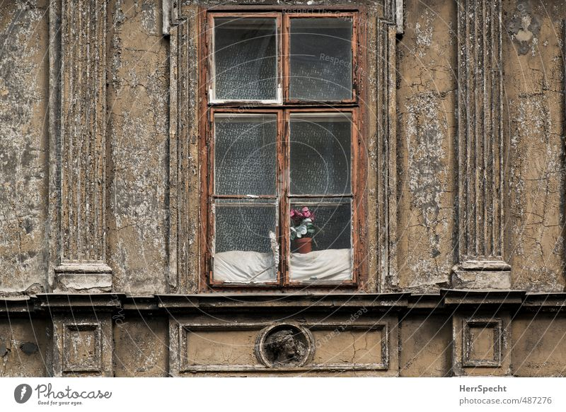 Tristesse with flowers Vienna Austria Town House (Residential Structure) Manmade structures Building Architecture Facade Window Old Poverty Historic Gloomy