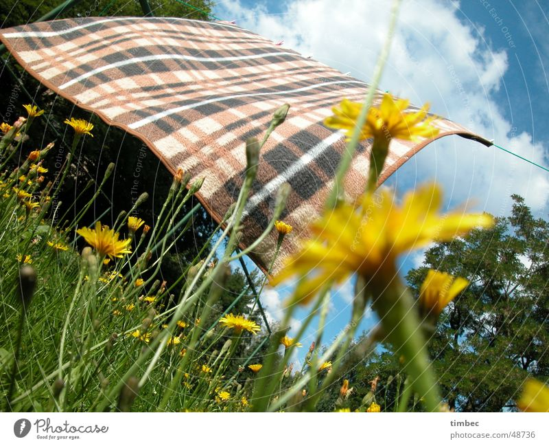 Blanket in the wind Checkered Blow Movement Passion Tepid Fresh Flower Multicoloured Happiness Dandelion Clouds White Grass Soft Green Tree Wood Meadow