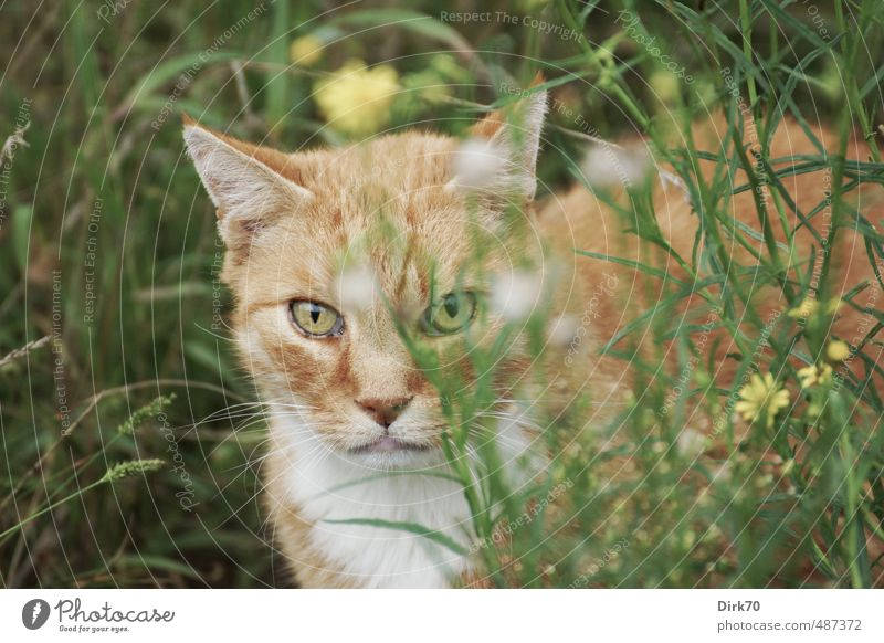 From cover Summer Flower Grass Garden Meadow Animal Pet Cat 1 Observe Looking Free Wild Brown Yellow Green Black White Self-confident Cool (slang) Willpower