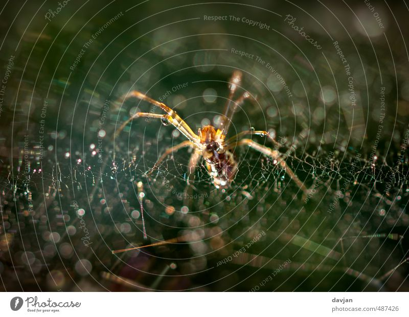 Caught Environment Nature Animal Spider 1 Observe Movement To feed Feeding Hunting Aggression Threat Authentic Disgust Creepy Hideous Astute Trashy Brown Green