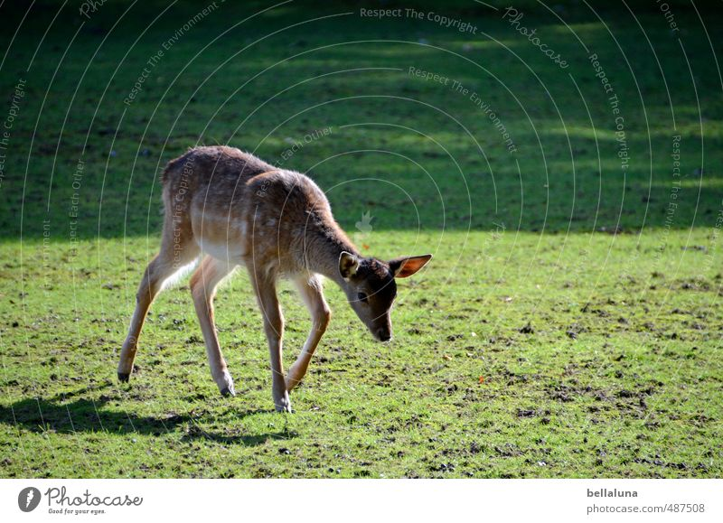Nature Plant Animal Forest Environment Baby animal Meadow Autumn Grass Park Field Wild animal Walking Beautiful weather Lawn Pelt