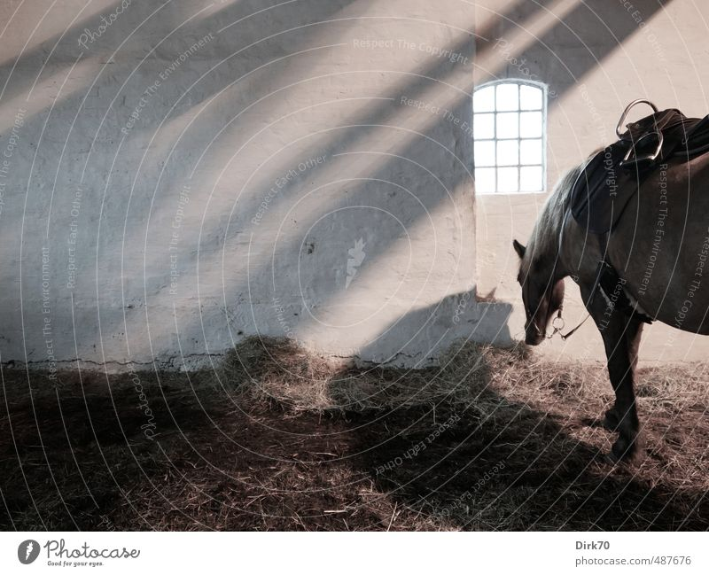 White Relaxation Loneliness Calm Animal Black Dark Window Wall (building) Wall (barrier) Gray Brown Gloomy Wait Stand Horse