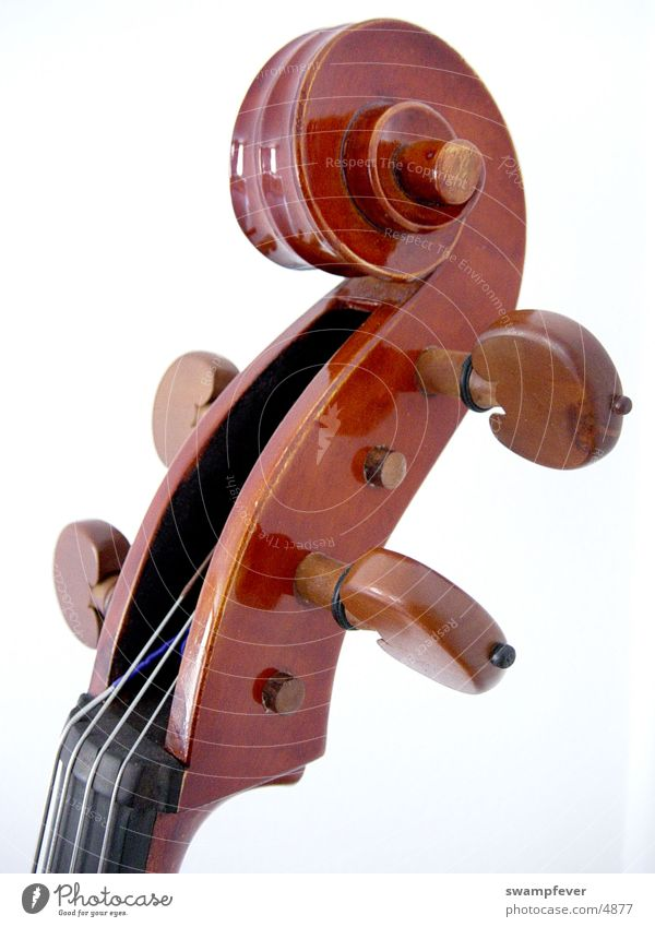 vertebra Wood Musical instrument string Cello Leisure and hobbies violoncello coarser tuning up attuning wooden strings