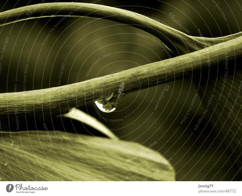 ginkgo Tree Leaf Drops of water Branch Water Rain Ginko