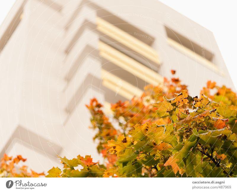 foliage discoloration Environment Autumn Tree Leaf High-rise Friendliness Tall Multicoloured Yellow Gold Orange Optimism Warm-heartedness Caution Serene Modest