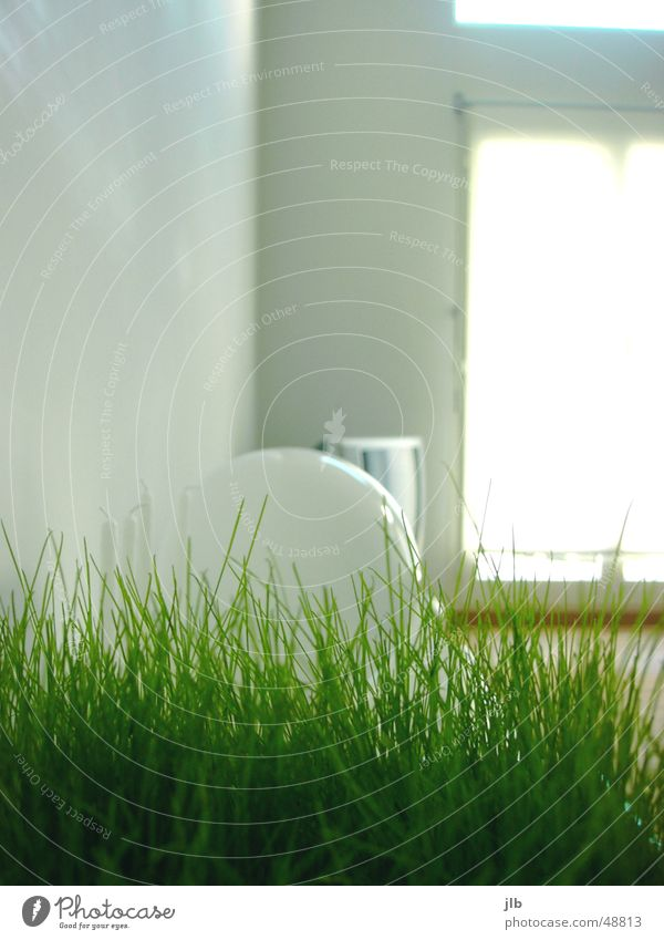 White Sun Green Lamp Window Grass Flat (apartment) Television Living or residing Living room