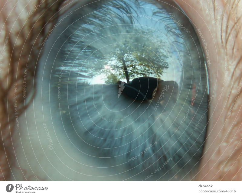 eye Eyelash Tree Pupil Reflection Meadow Leaf Eyes blue eyes Face Macro (Extreme close-up) Sky Far-off places Landscape detail. Lie Exterior shot
