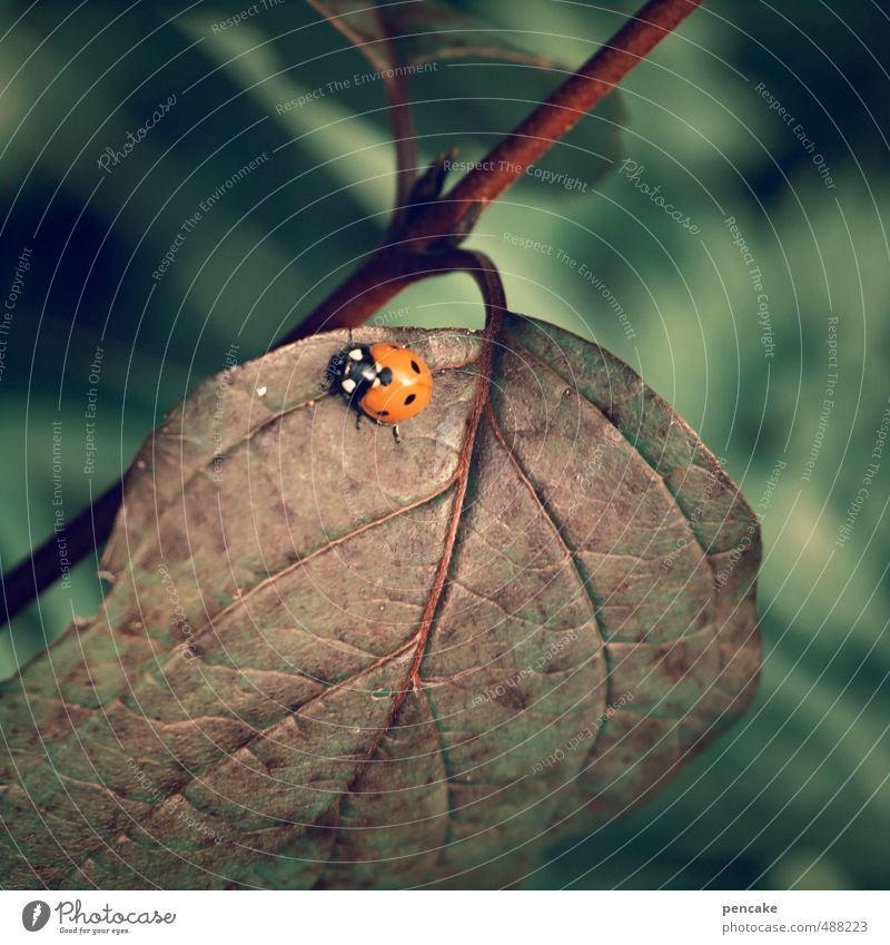 runs and runs and runs... Nature Plant Animal Autumn Leaf Beetle 1 Sign Esthetic Contentment Life Calm Endurance Ladybird Car Score Point Brown Walking Happy