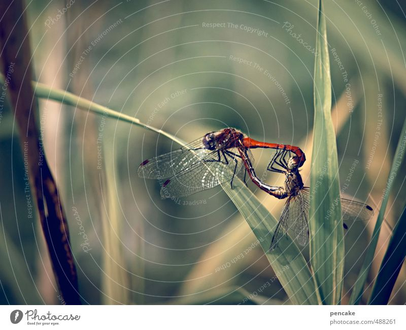 mirrors | mirror traffic Nature Landscape Plant Animal Summer Lakeside Dragonfly 2 Sign Embrace Propagation inversely Colour photo Exterior shot Close-up