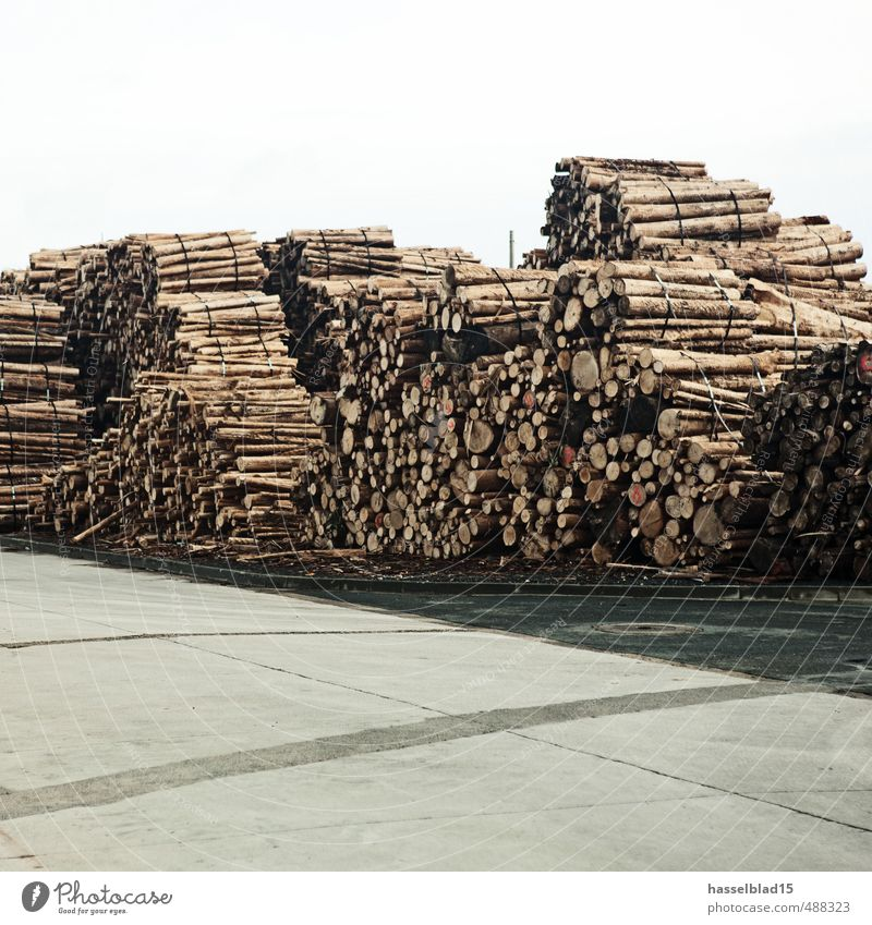 cellulose Luxury Climate change Tree Dry Tree trunk Storage Cellulose Bundle Wood Ecological Renewable Colour photo Subdued colour Exterior shot Deserted