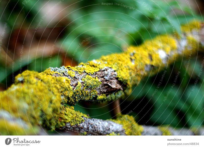 Green Wood Branch Moss Tree bark Tree trunk