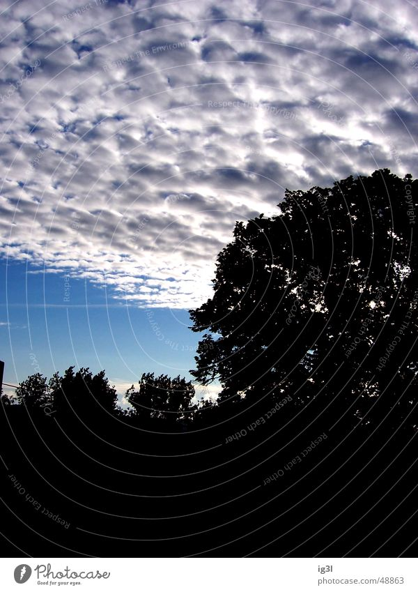 Nature Sky Tree Leaf Clouds Rain Treetop Bad weather