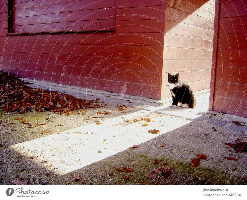 Kitten in the autumn sun Cat Autumn Leaf Loneliness Multicoloured Sun Shadow lonely