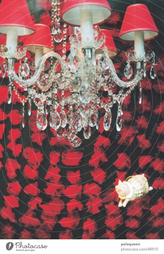 Red Lamp Kitsch Swine Shop window Piglet Chandelier