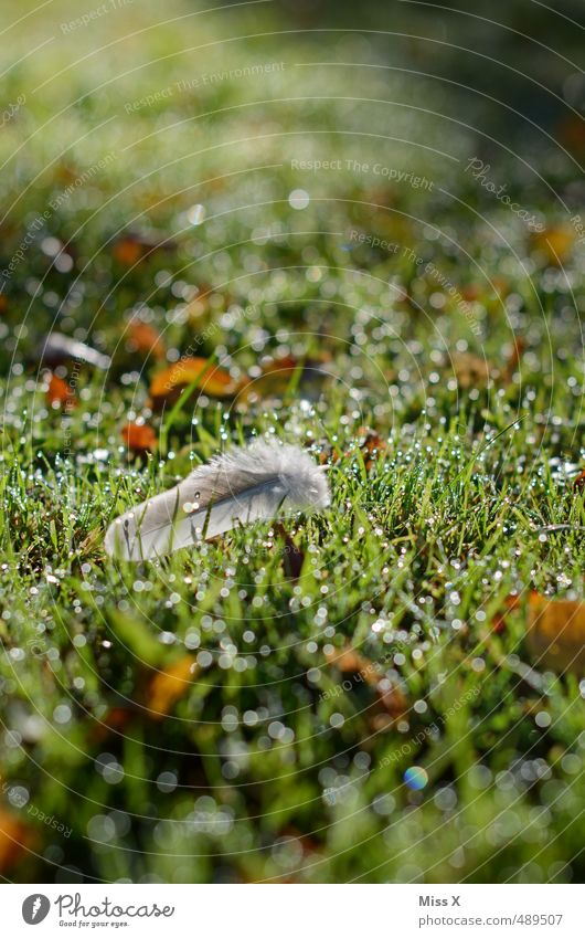 morning dew Drops of water Rain Grass Meadow Glittering Wet Feather Easy Sunlight Dew Colour photo Exterior shot Close-up Deserted Copy Space top