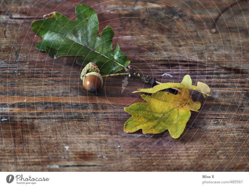 acorns Handicraft Nature Autumn Leaf Wood Brown Acorn Oak leaf Wooden table Wood grain Board Twig Autumnal Craft materials Autumn leaves Autumnal colours