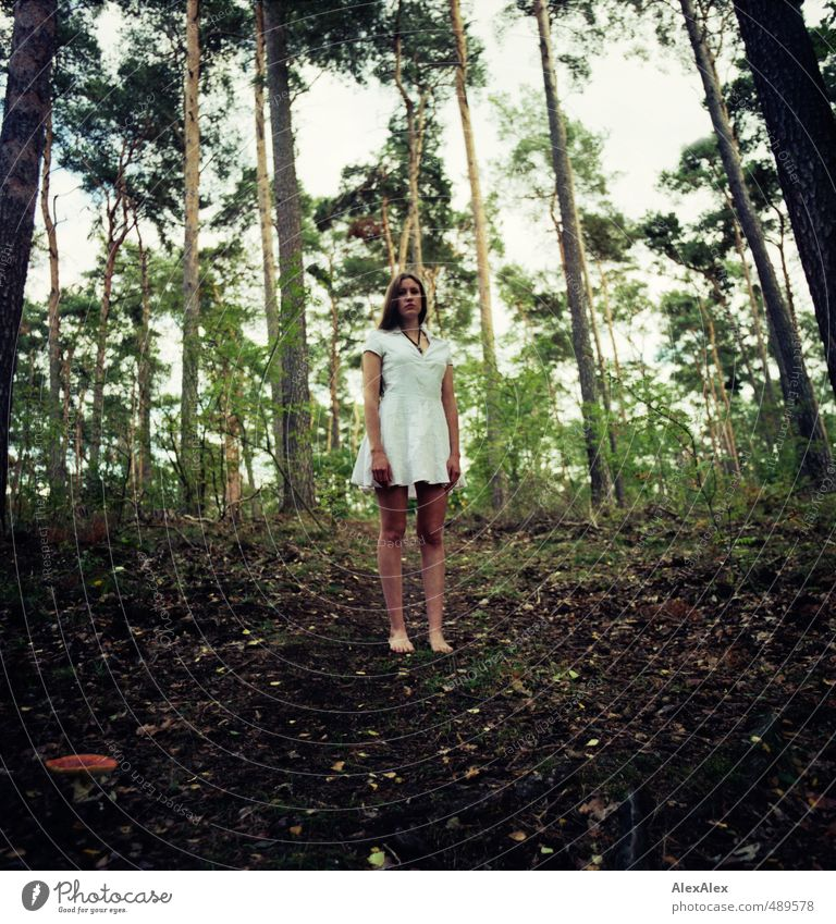 lust for the forest Young woman Youth (Young adults) Body Legs 18 - 30 years Adults Autumn Tree Leaf Amanita mushroom Forest Dress Barefoot Brunette Long-haired
