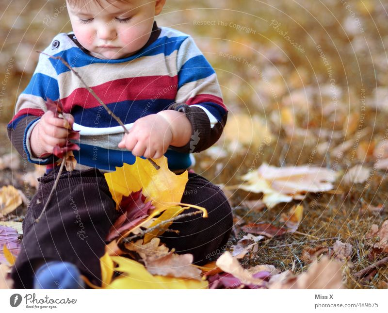 Human being Child Joy Leaf Emotions Autumn Playing Happy Moody Leisure and hobbies Infancy Contentment Sit Baby Happiness Cute