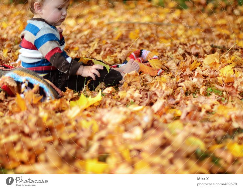 Human being Child Joy Leaf Forest Autumn Playing Garden Park Leisure and hobbies Infancy Contentment Sit Baby Happiness Cute
