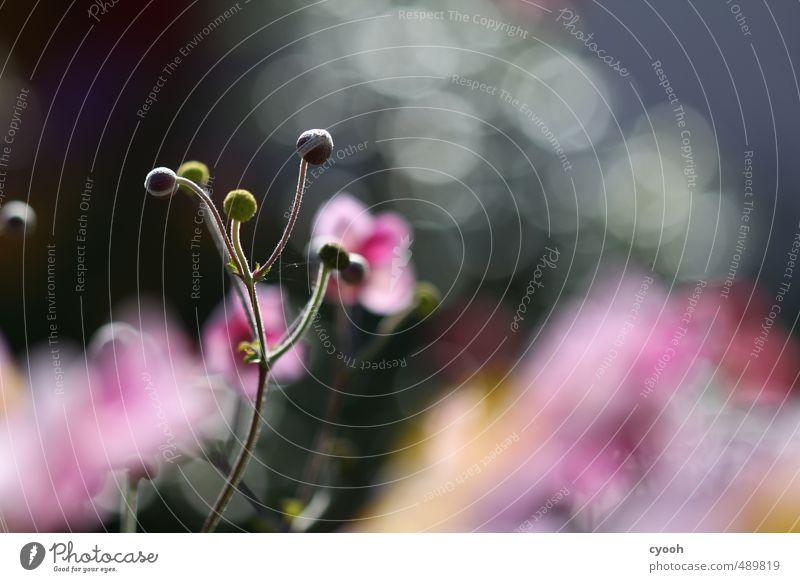 Nature Plant Colour Summer Flower Yellow Autumn Spring Blossom Garden Pink Illuminate Growth Fresh Esthetic Future
