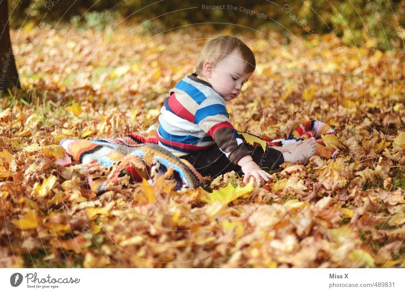 Human being Child Joy Leaf Forest Autumn Playing Garden Moody Park Leisure and hobbies Infancy Contentment Sit Baby Happiness