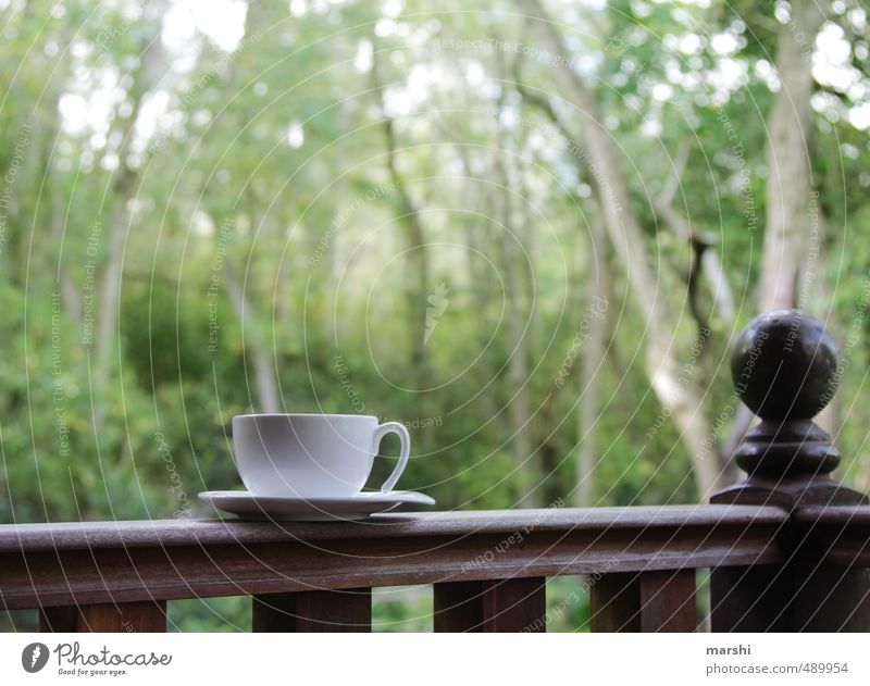 Nature Relaxation Forest Emotions Beverage To enjoy Break Coffee Drinking Tea Virgin forest Cup Veranda Hot drink Teatime