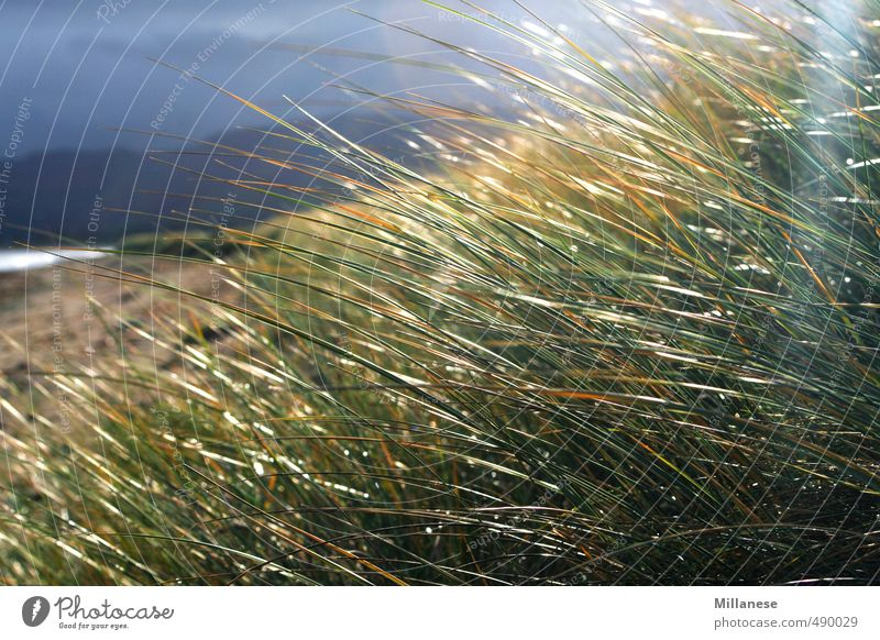 Grass by the sea Environment Nature Landscape Meadow Contentment Ocean Storm Relaxation Colour photo Exterior shot Deserted Shallow depth of field