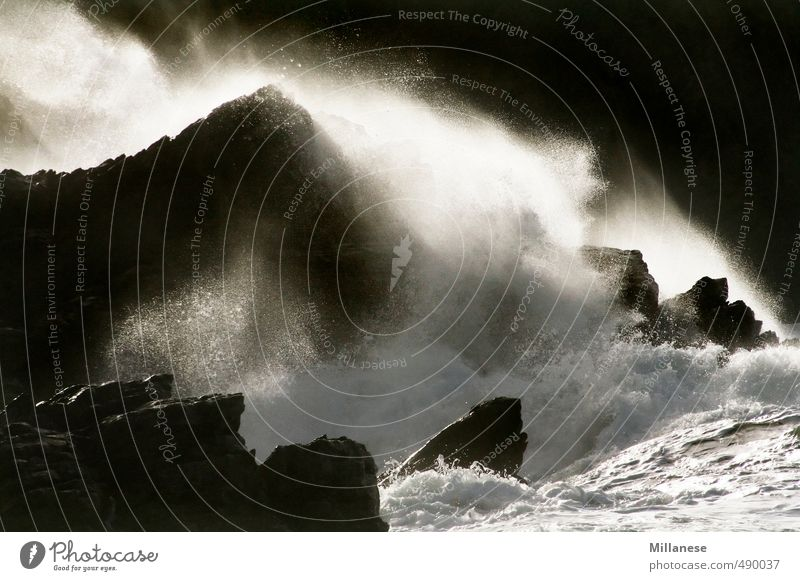 surf Nature Landscape Water Rock Waves Bay Reef Ocean Power Surf Colour photo Exterior shot