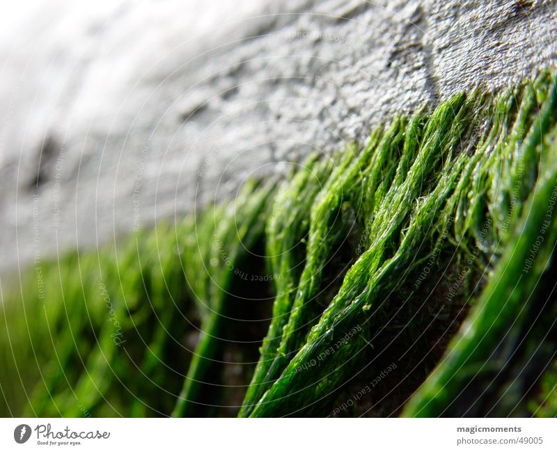 driftwood Driftwood Wood Beach Ocean Algae Wood flour Close-up Tree Blur Near Green Gray Old marrow close Tree trunk Derelict Perspective Detail