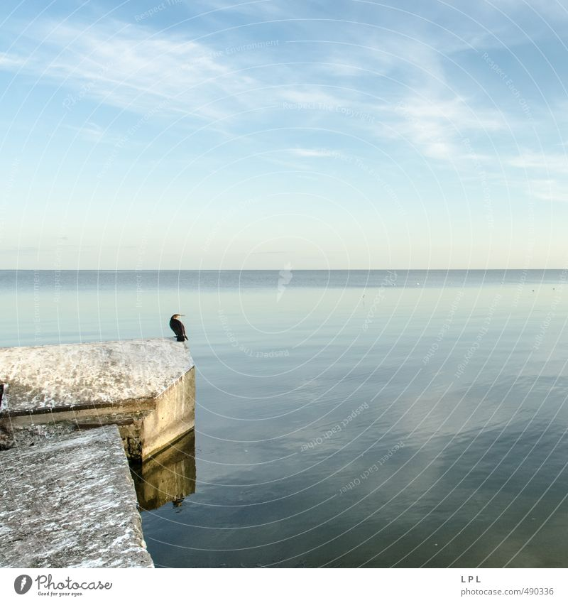 Waiting for Godot : Curonian Spit Nature Water Sky Clouds Animal Wild animal Bird 1 Crouch Dream Sadness Authentic Infinity Blue Gray Serene Calm Jetty Harbour