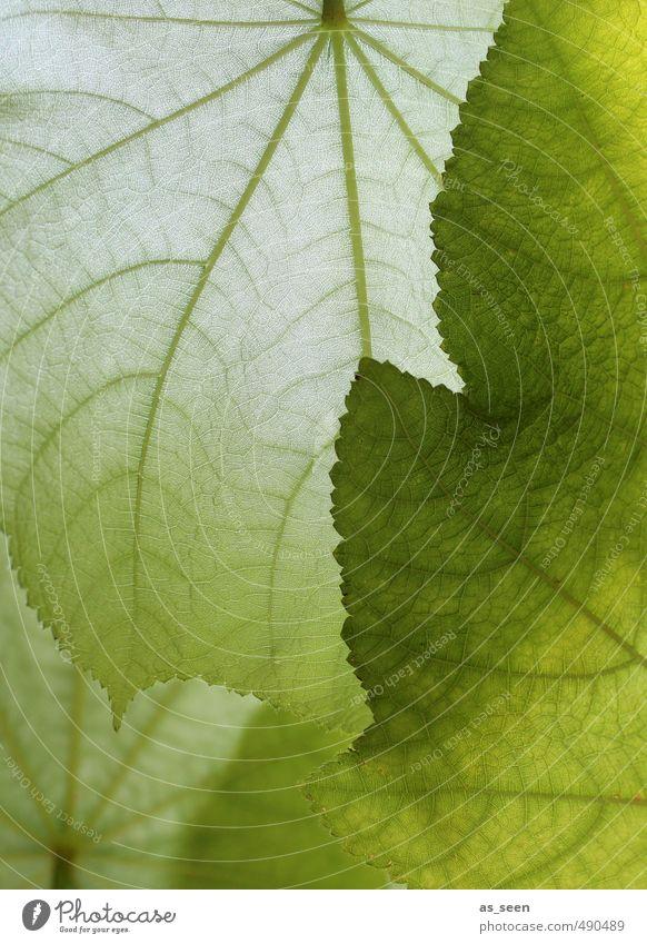 Shades of green III Exotic Beautiful Healthy Wellness Spa Flat (apartment) Interior design Yoga Renewable energy Environment Nature Plant Leaf Foliage plant