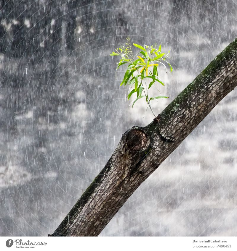 lifeline Environment Nature Water Drops of water Spring Summer Bad weather Rain Plant Tree Leaf Foliage plant Town Downtown Wall (barrier) Wall (building)