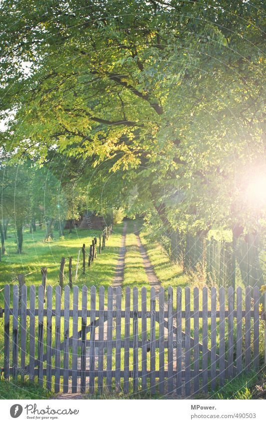 LOCKED UP. Nature Autumn Tree Grass Meadow Field Forest Illuminate Footpath Fence Gate Wood Lanes & trails Pasture Farm Closed Leaf canopy Green Tracks