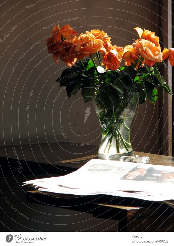 cafe orange Rose Newspaper Ashtray Sidewalk café Blossoming Bouquet Flower Café Back-light Table Vase Gastronomy Magazine Faded robbie williams glass vase