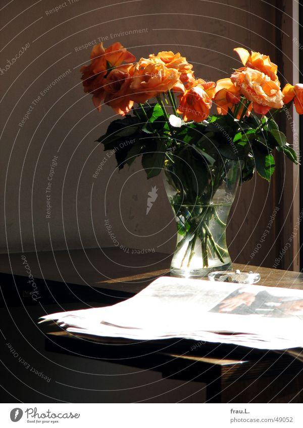 Flower Table Rose Newspaper Gastronomy Blossoming Café Bouquet Magazine Vase Faded Ashtray Sidewalk café