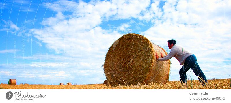 Man Sun Blue Summer Work and employment Meadow Hair and hairstyles Field Pants Straw Coil Hard Vest Push Bale of straw