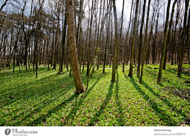 forest Environment Nature Landscape Plant Air Sky Horizon Sun Sunlight Spring Weather Beautiful weather Tree Grass Bushes Moss Leaf Park Meadow Forest Stand