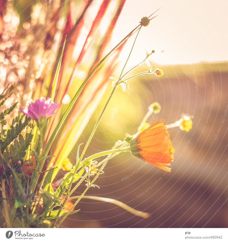 autumn herbs Environment Nature Plant Autumn Beautiful weather Flower Grass Blossom Agricultural crop Wild plant Park Meadow Field Bright Yellow Orange Warmth