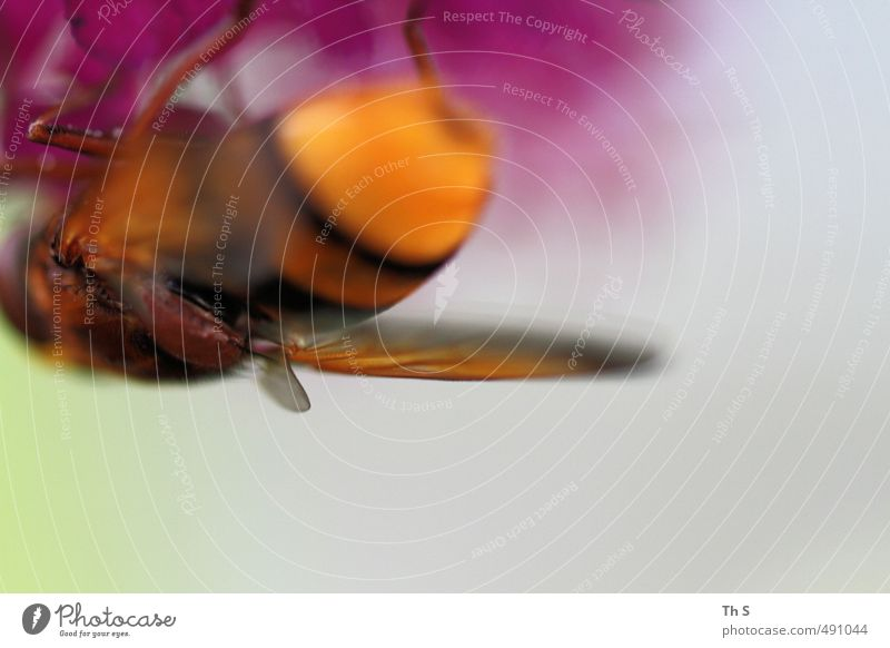 bee Bee 1 Animal Esthetic Natural Life Colour Nature Abstract Wild Spring Colour photo Multicoloured Exterior shot Copy Space bottom Day