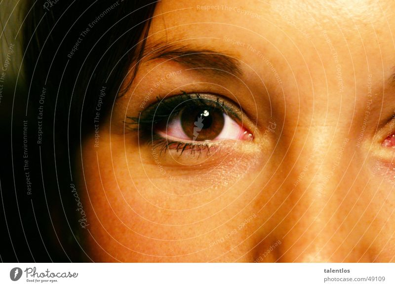 Woman Eyes Brown